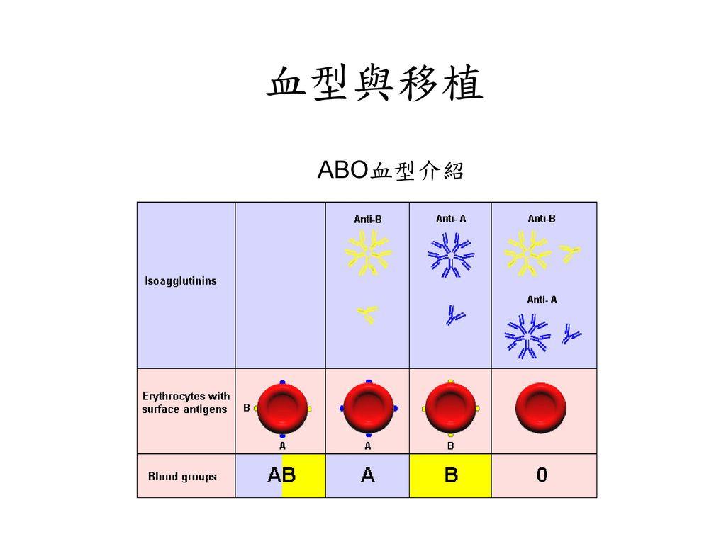 血型與移植 ABO血型介紹