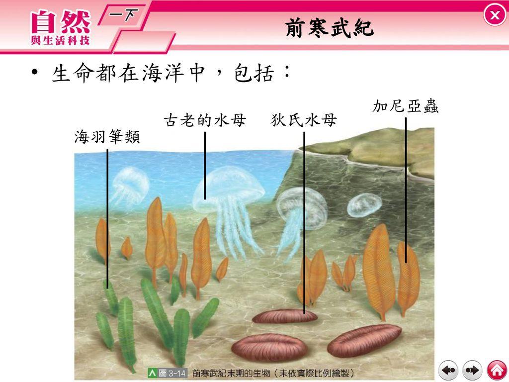 前寒武紀 生命都在海洋中,包括: 加尼亞蟲 古老的水母 狄氏水母 海羽筆類