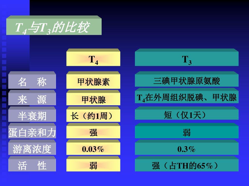 T4与T3的比较 T4 T3 名 称 来 源 半衰期 蛋白亲和力 游离浓度 活 性 甲状腺素 三碘甲状腺原氨酸 T4在外周组织脱碘、甲状腺