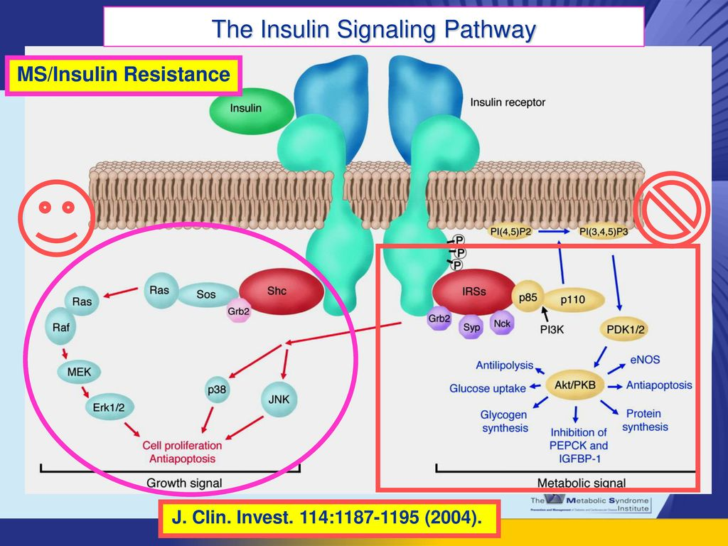 MS/Insulin Resistance