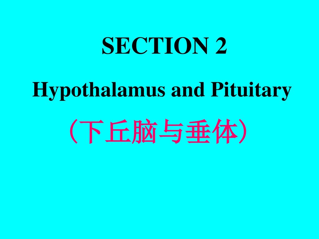 SECTION 2 Hypothalamus and Pituitary (下丘脑与垂体)