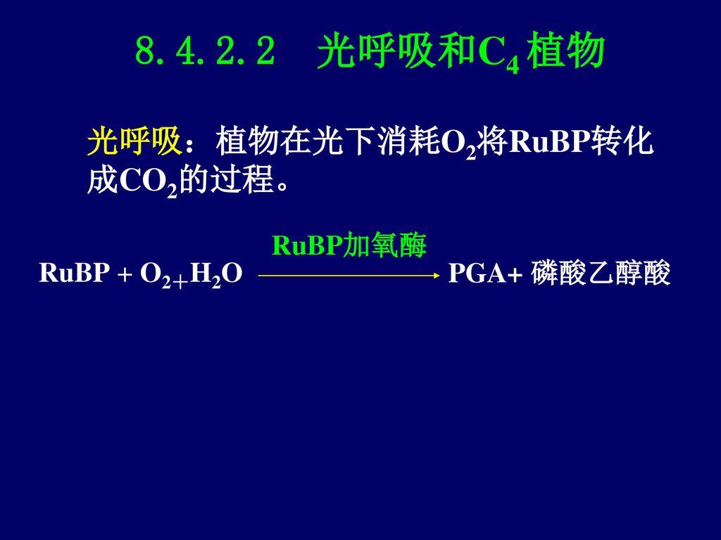 叶绿体(chloroplast) 一、叶绿体的形态 二、结构与化学组成 三、叶绿体蛋白的定位 四、叶绿体的功能——光合作用