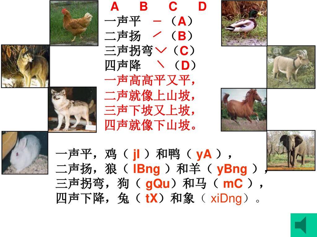 A B C D 一声平 (A) 二声扬 (B) 三声拐弯 (C) 四声降 (D) 一声高高平又平, 二声就像上山坡,