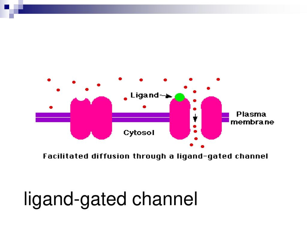 ligand-gated channel