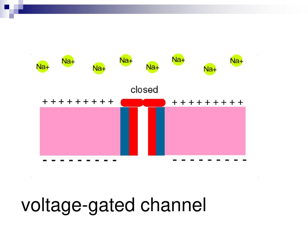 voltage-gated channel