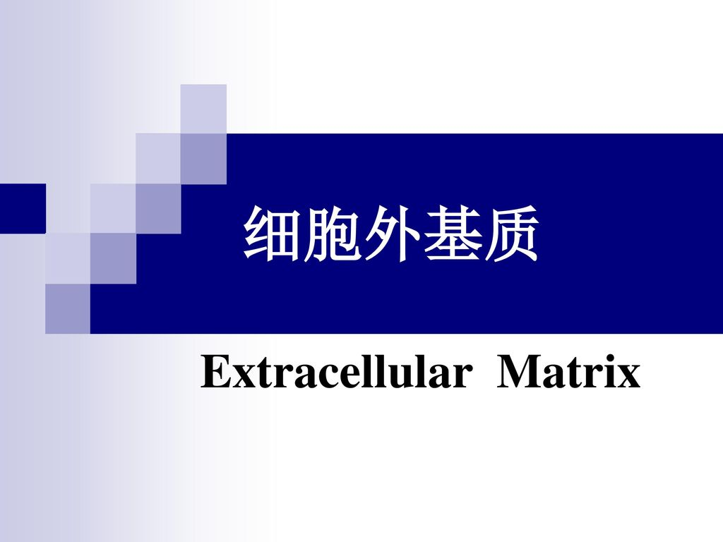细胞外基质 Extracellular Matrix