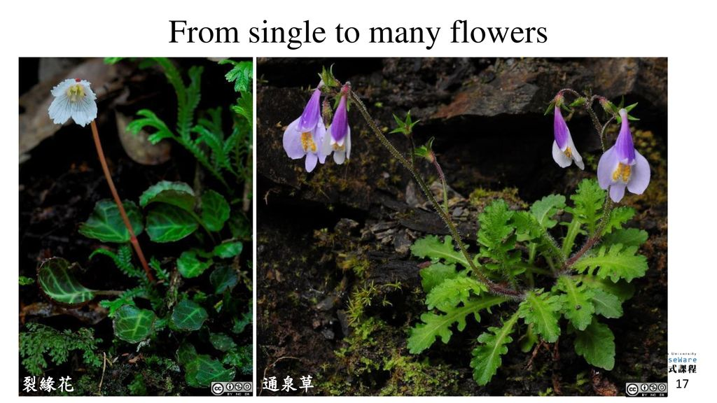 From single to many flowers