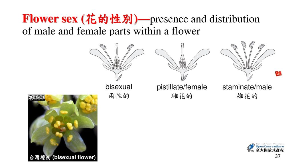 Flower sex (花的性別)—presence and distribution of male and female parts within a flower