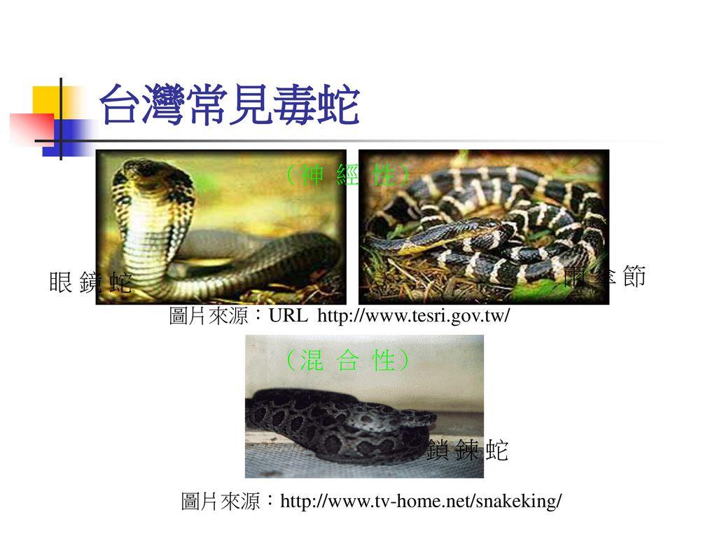 台灣常見毒蛇 (神 經 性) 雨 傘 節 眼 鏡 蛇 (混 合 性) 鎖 鍊 蛇
