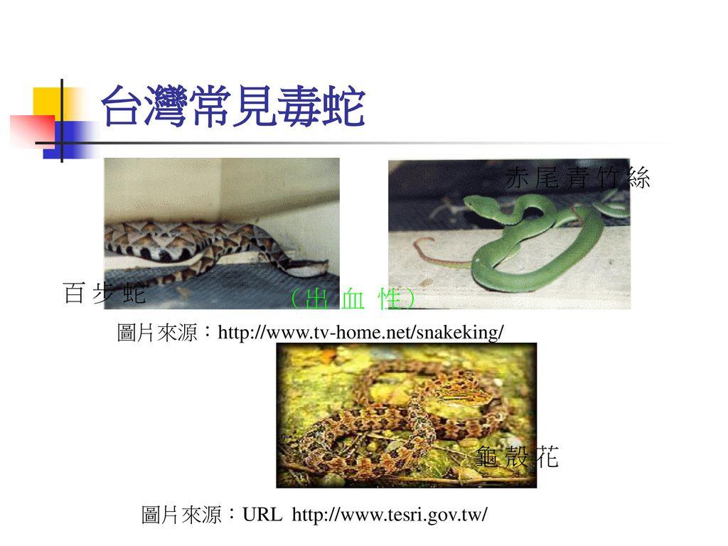 台灣常見毒蛇 赤 尾 青 竹 絲 百 步 蛇 (出 血 性) 龜 殼 花