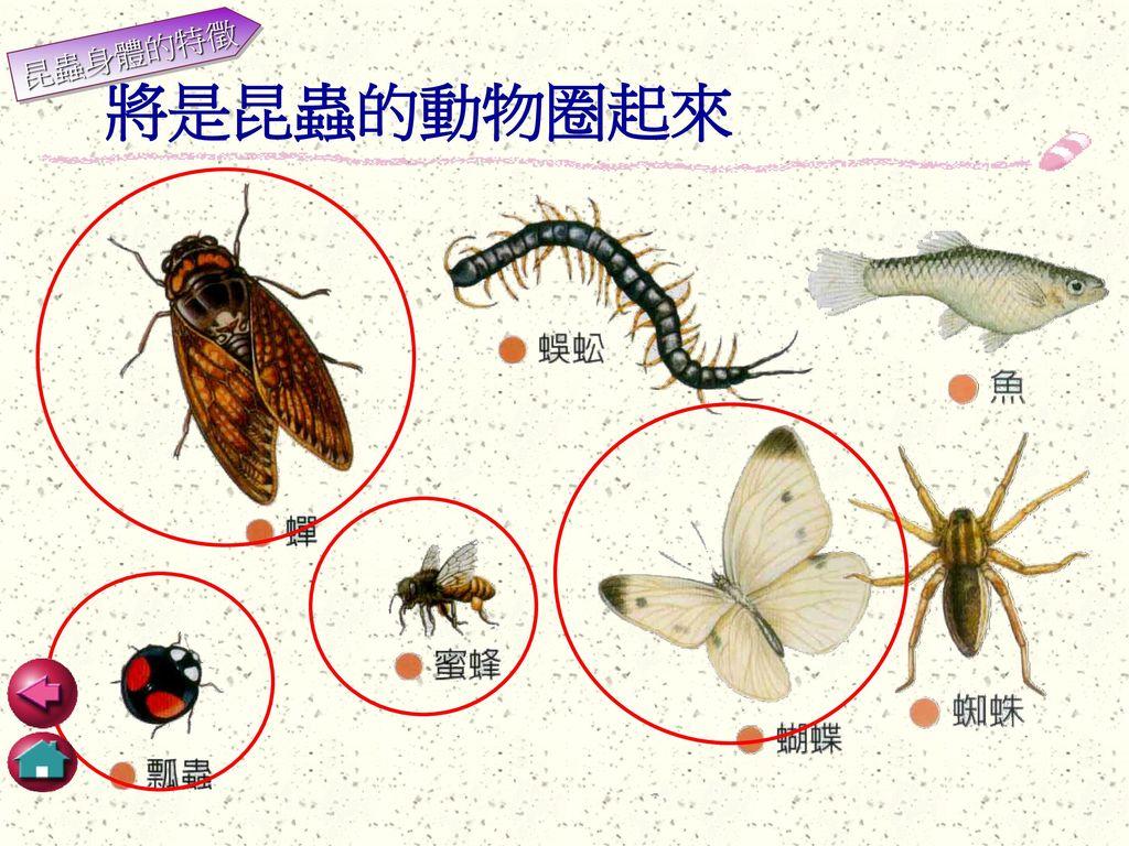 昆蟲身體的特徵 將是昆蟲的動物圈起來