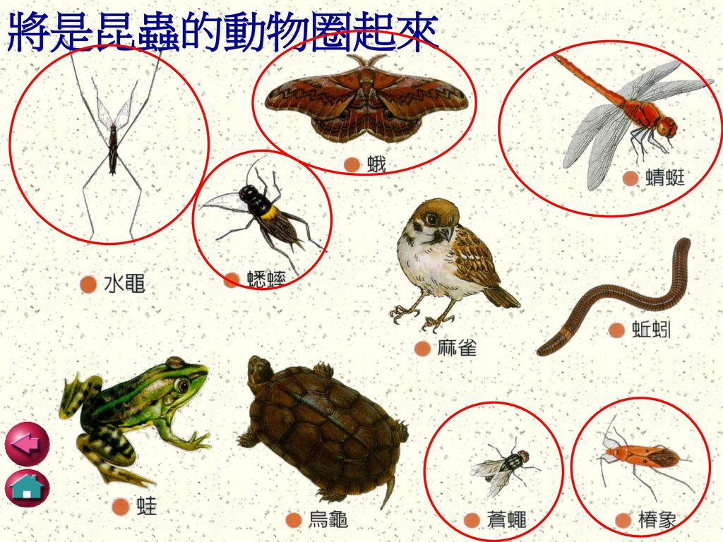 將是昆蟲的動物圈起來