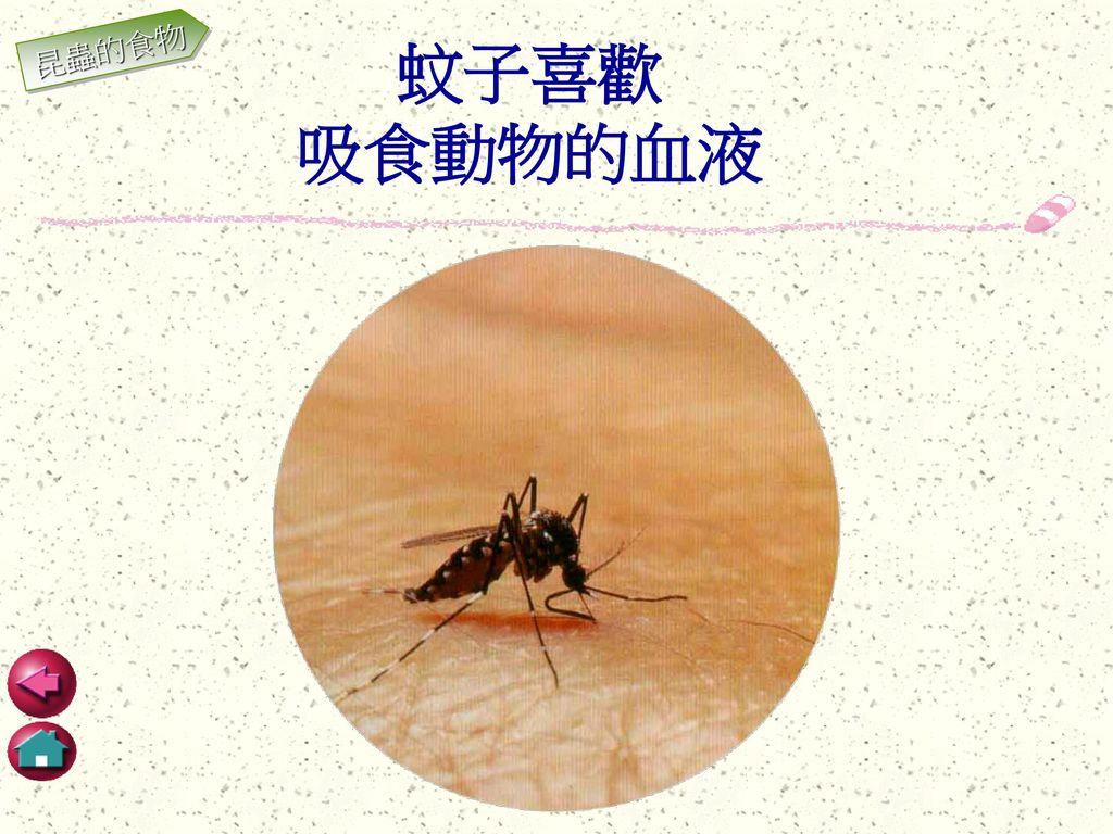 昆蟲的食物 蚊子喜歡 吸食動物的血液