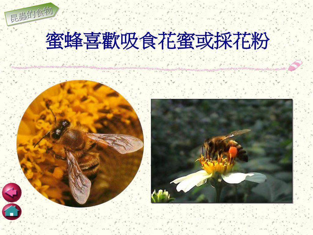 昆蟲的食物 蜜蜂喜歡吸食花蜜或採花粉