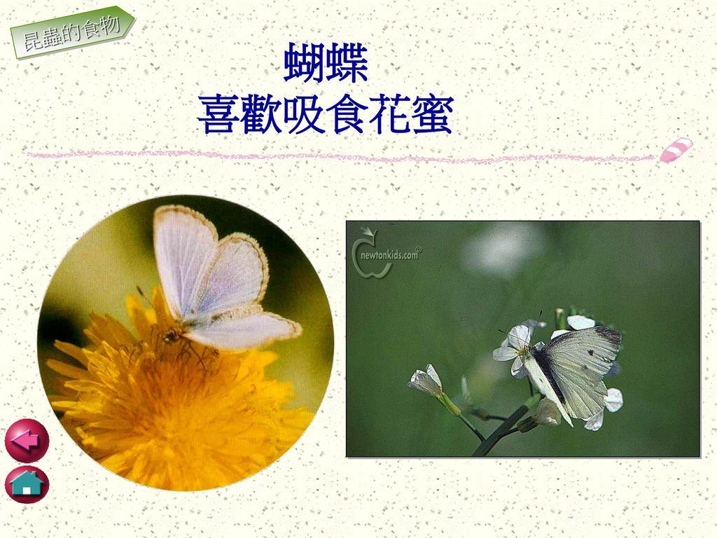 昆蟲的食物 蝴蝶 喜歡吸食花蜜