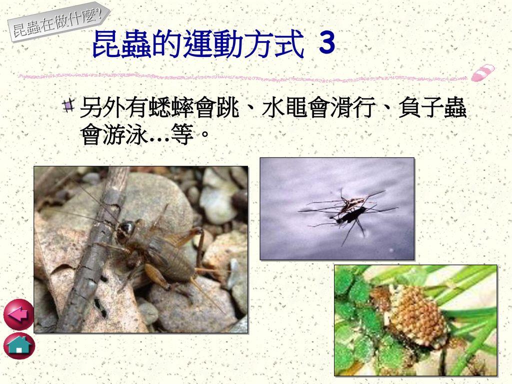 昆蟲在做什麼 昆蟲的運動方式 3 另外有蟋蟀會跳、水黽會滑行、負子蟲會游泳…等。