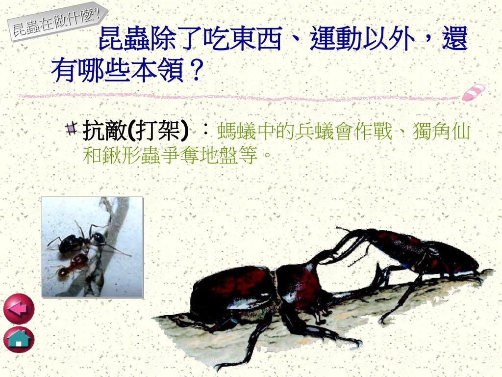 昆蟲除了吃東西、運動以外,還有哪些本領?