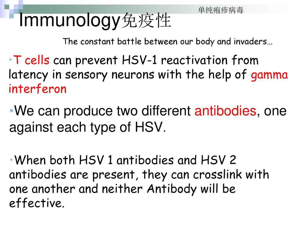Immunology免疫性 单纯疱疹病毒. The constant battle between our body and invaders…
