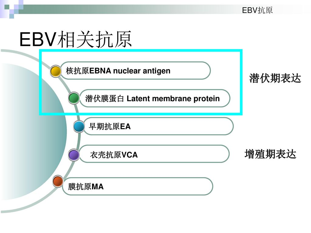 Discovery of EBV and Important Dates