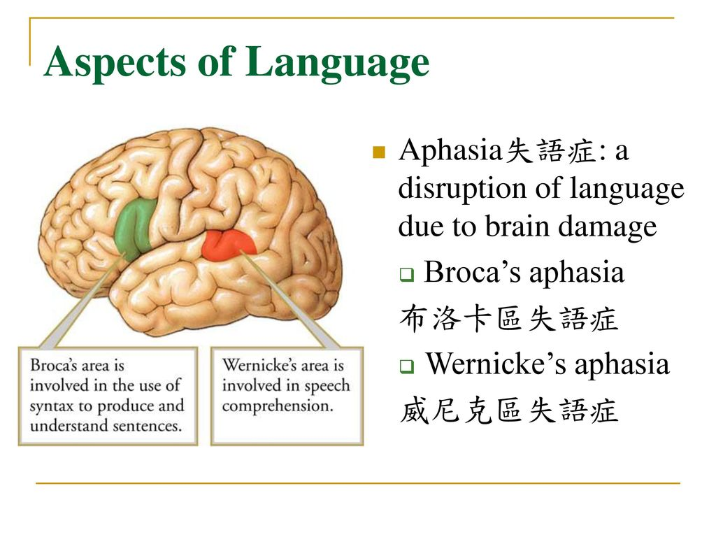 Aspects of Language Aphasia失語症: a disruption of language due to brain damage. Broca's aphasia. 布洛卡區失語症.