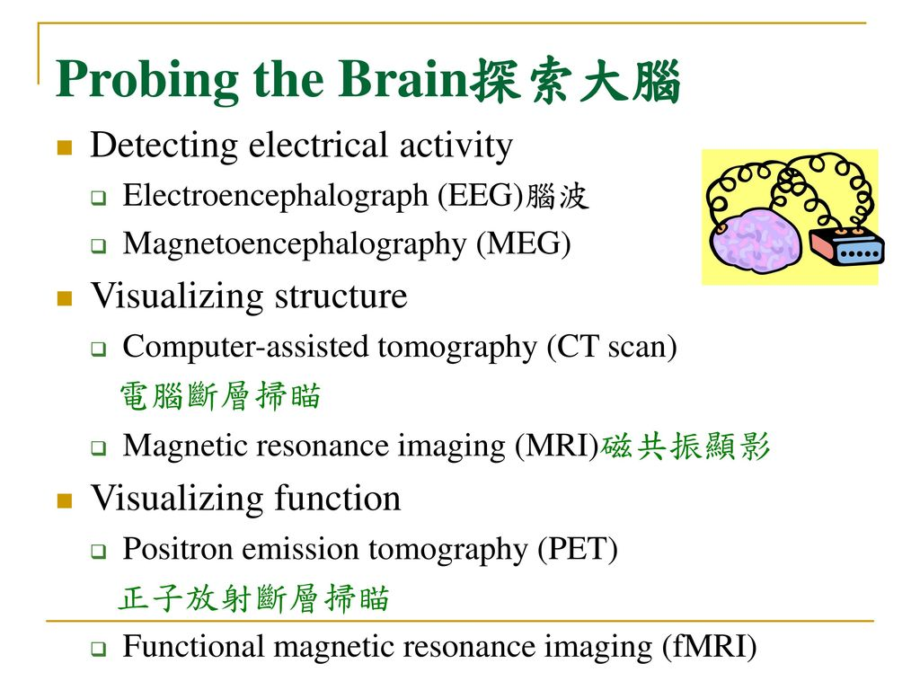 Probing the Brain探索大腦 Detecting electrical activity