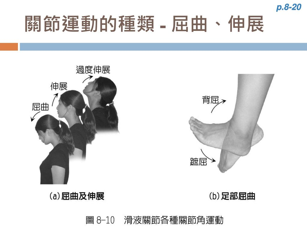 p.8-20 關節運動的種類 - 屈曲、伸展