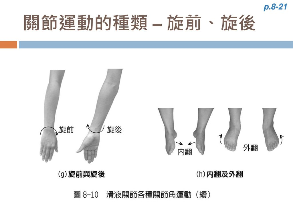 p.8-21 關節運動的種類 – 旋前、旋後