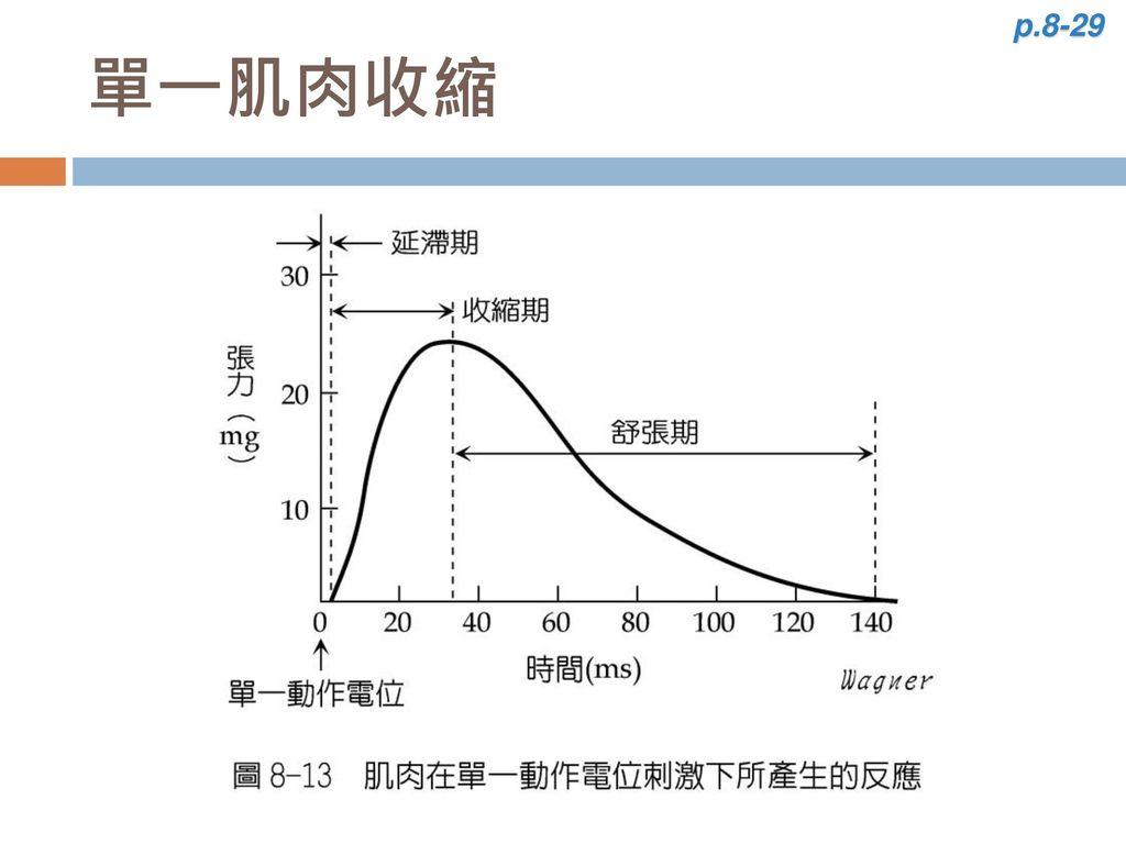 p.8-29 單一肌肉收縮