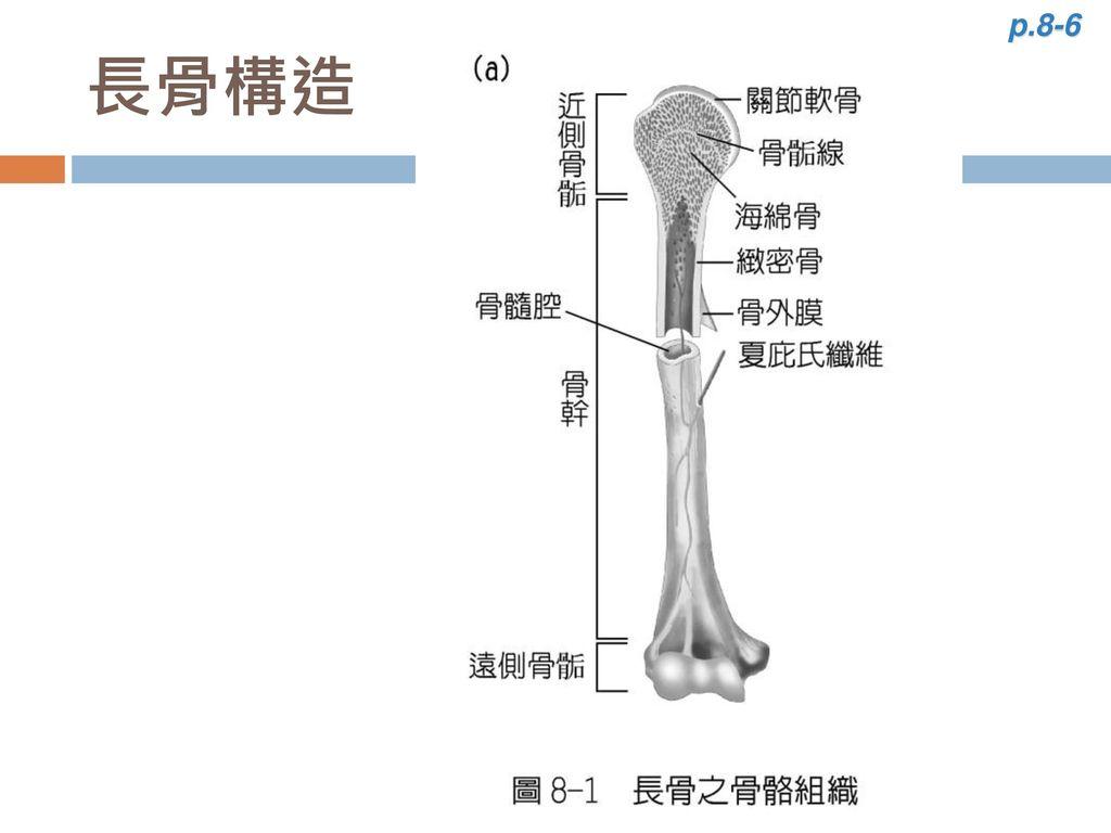 p.8-6 長骨構造