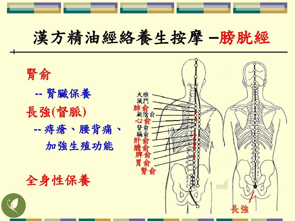 漢方精油經絡養生按摩 –膀胱經 腎俞 -- 腎臟保養 長強(督脈) 全身性保養 -- 痔瘡、腰背痛、 加強生殖功能 長強 肺俞 心俞 肝俞
