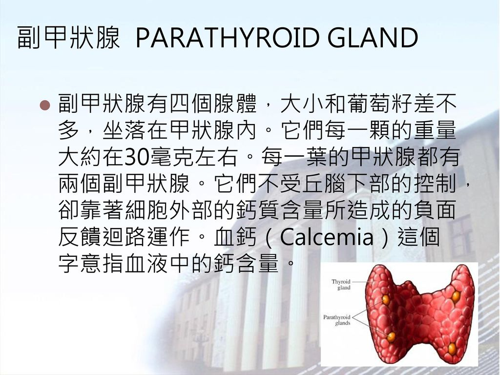 副甲狀腺 PARATHYROID GLAND
