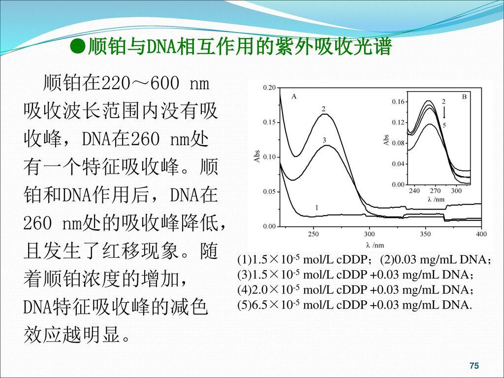 ●顺铂与DNA相互作用的紫外吸收光谱 顺铂在220~600 nm吸收波长范围内没有吸收峰,DNA在260 nm处有一个特征吸收峰。顺铂和DNA作用后,DNA在260 nm处的吸收峰降低,且发生了红移现象。随着顺铂浓度的增加,DNA特征吸收峰的减色效应越明显。