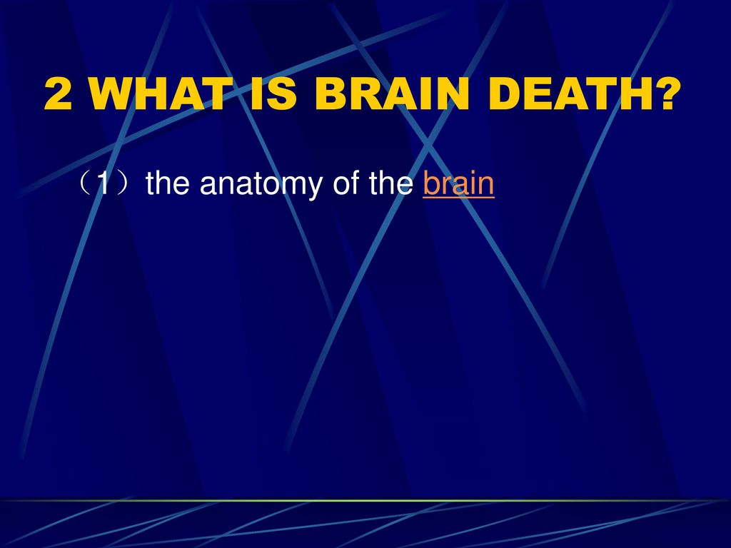2 WHAT IS BRAIN DEATH (1)the anatomy of the brain