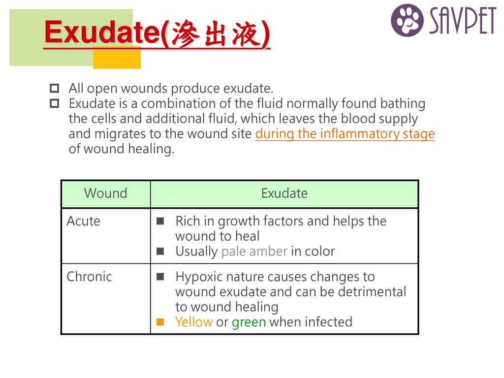 Exudate(滲出液) All open wounds produce exudate.