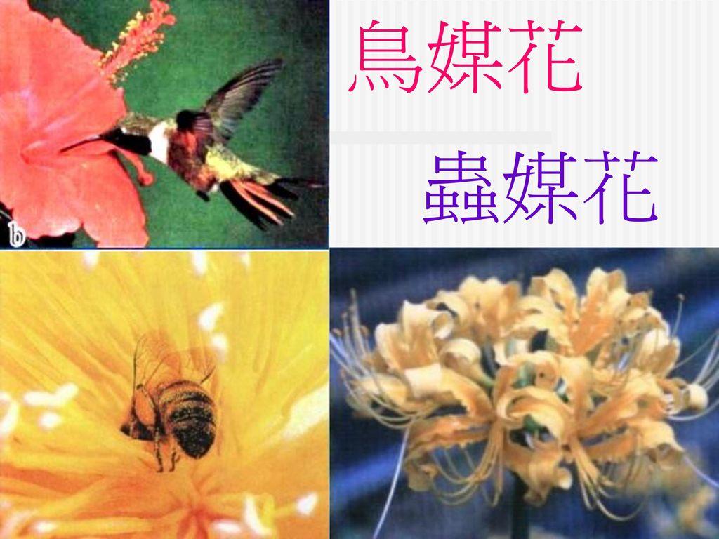 鳥媒花 蟲媒花