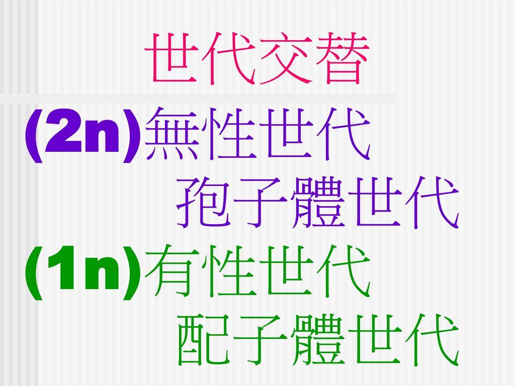 世代交替 (2n)無性世代 孢子體世代 (1n)有性世代 配子體世代