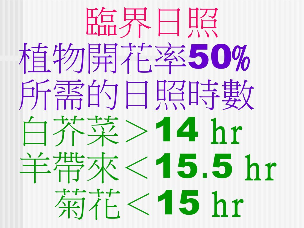 臨界日照 植物開花率50% 所需的日照時數 白芥菜>14 hr 羊帶來<15.5 hr 菊花<15 hr