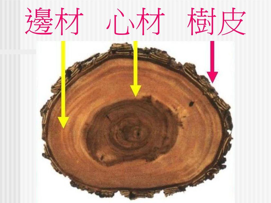邊材 心材 樹皮