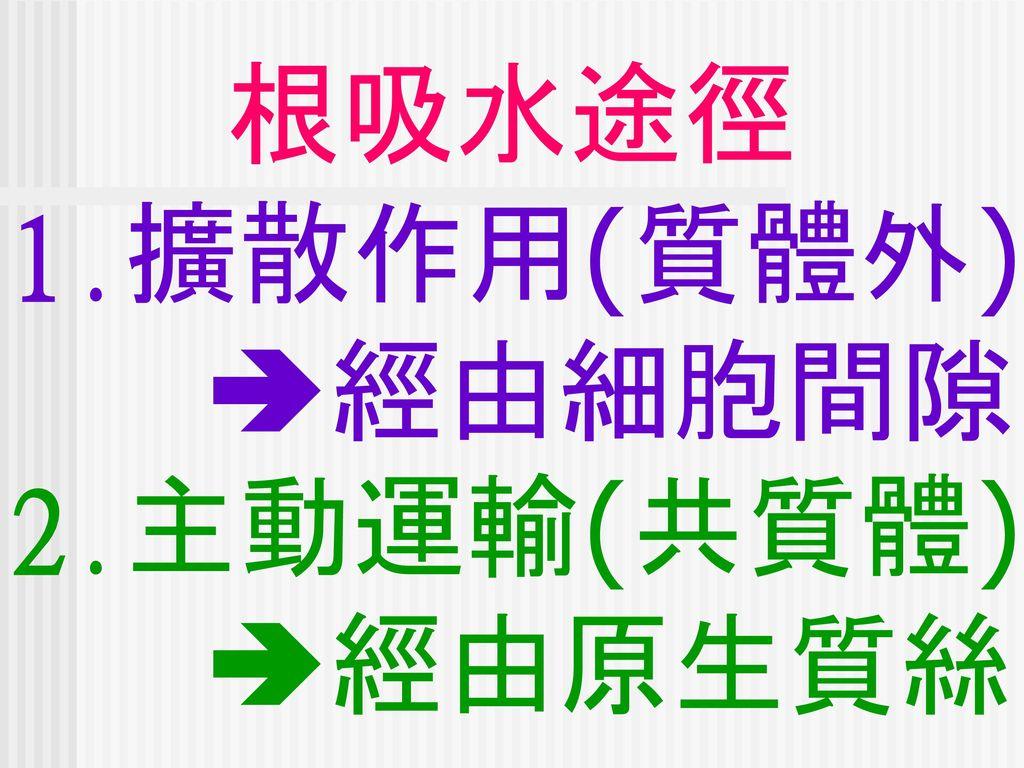 根吸水途徑 1.擴散作用(質體外) 經由細胞間隙 2.主動運輸(共質體) 經由原生質絲