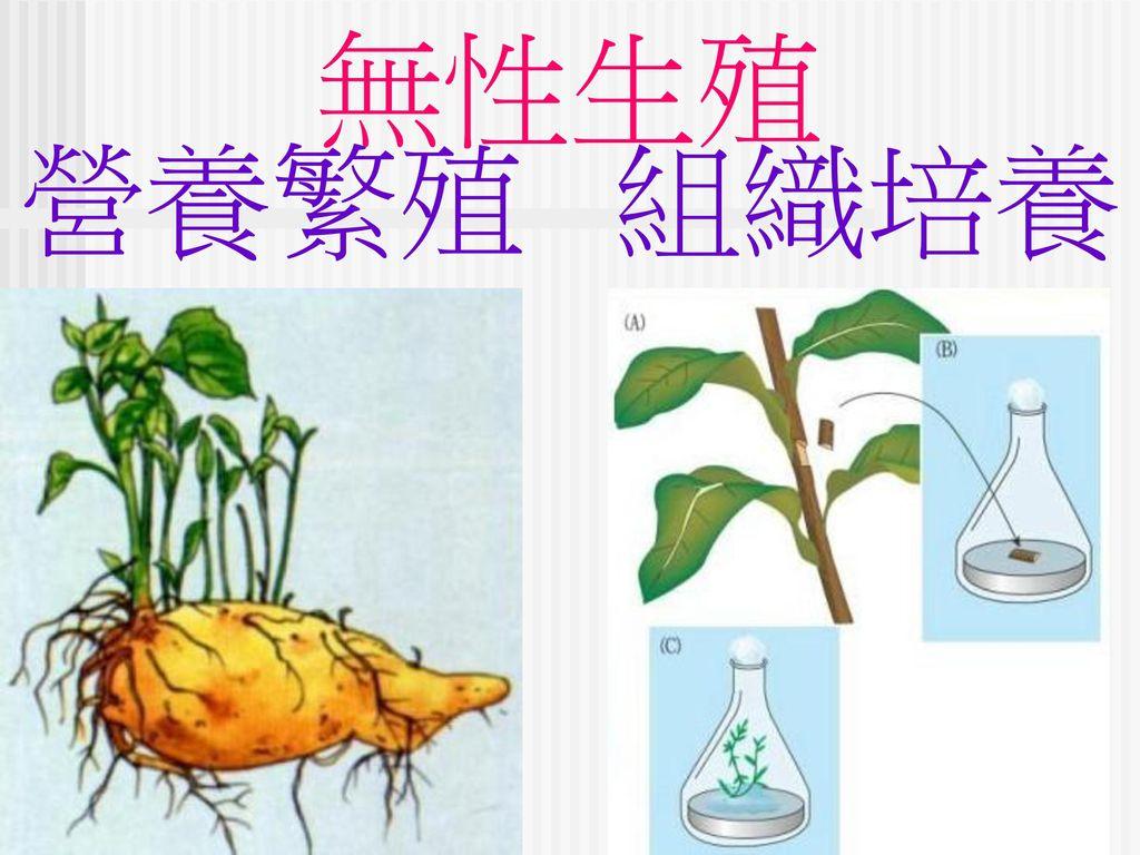 無性生殖 營養繁殖 組織培養
