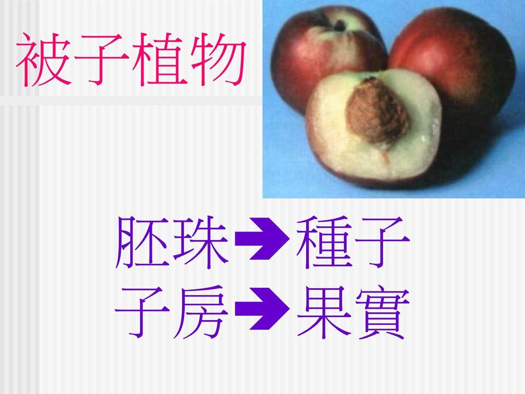 被子植物 胚珠種子 子房果實