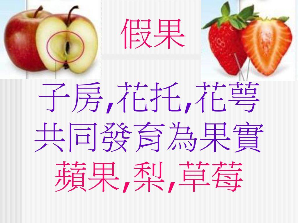 假果 子房,花托,花萼 共同發育為果實 蘋果,梨,草莓