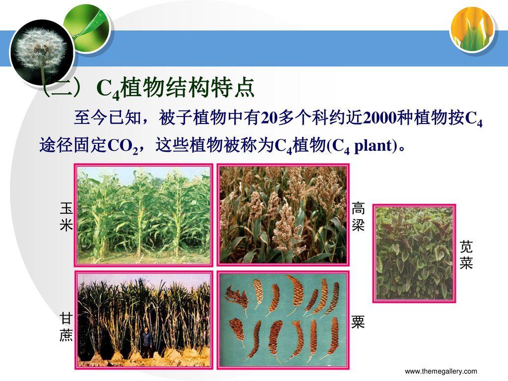 第三章 植物的光合作用 教师:李侠 学院:生命科学学院 《植物物生理学》 www.themegallery.com.