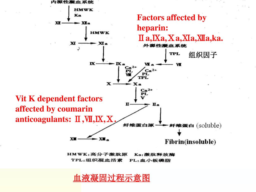 Factors affected by heparin: Ⅱa,Ⅸa,Ⅹa,Ⅺa,Ⅻa,ka.