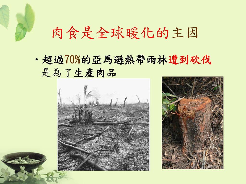 肉食是全球暖化的主因 超過70%的亞馬遜熱帶雨林遭到砍伐是為了生產肉品 51