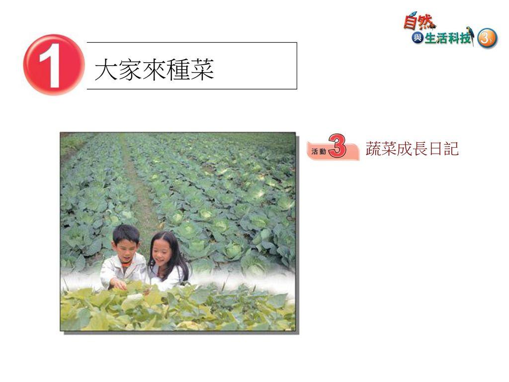 大家來種菜 蔬菜成長日記