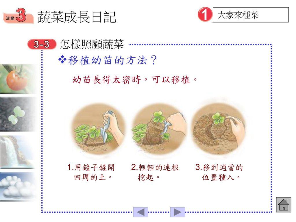 蔬菜成長日記 移植幼苗的方法? 怎樣照顧蔬菜 幼苗長得太密時,可以移植。 大家來種菜 1.用鏟子鏟開四周的土。 2.輕輕的連根挖起。