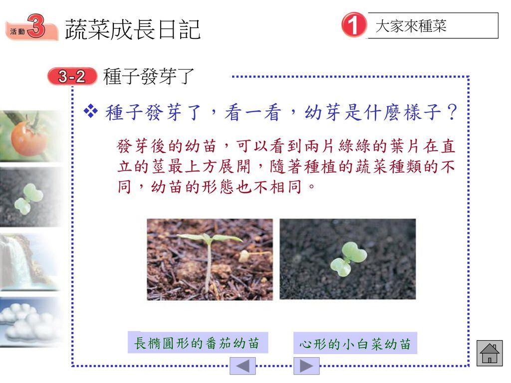 蔬菜成長日記 種子發芽了,看一看,幼芽是什麼樣子? 種子發芽了
