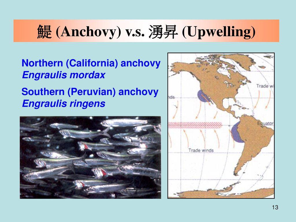 鯷 (Anchovy) v.s. 湧昇 (Upwelling)
