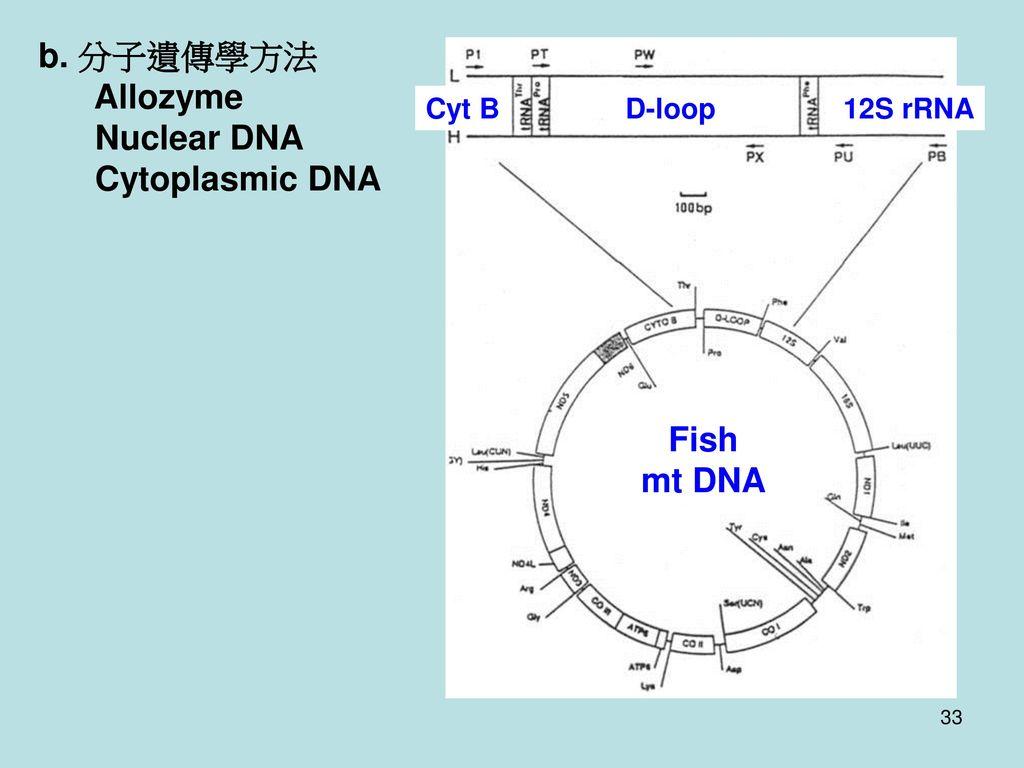b. 分子遺傳學方法 Allozyme Nuclear DNA Cytoplasmic DNA Fish mt DNA D-loop